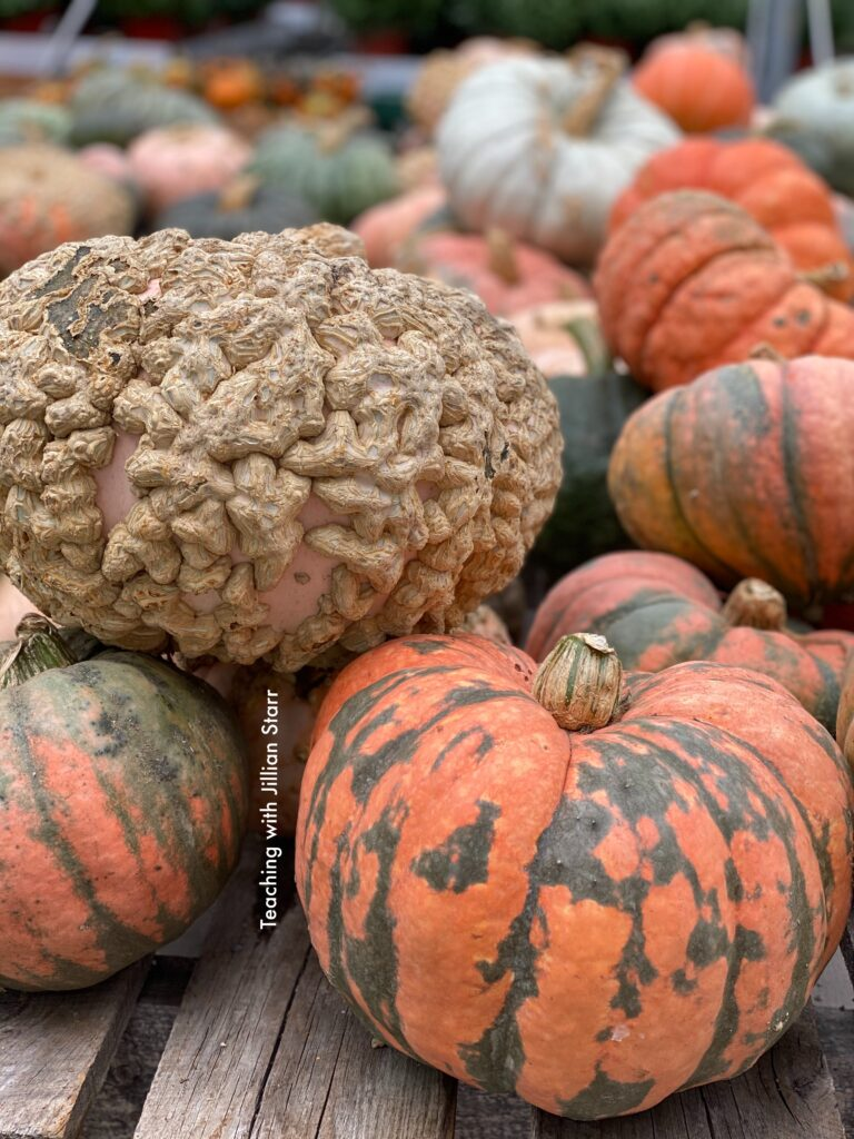 A large pile of different pumpkins and gourds to use for a Halloween science center.
